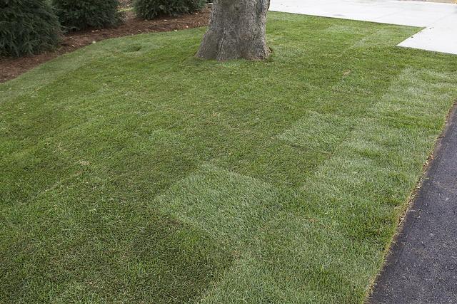 Old Turf Greenhorizons Grass Turf Green Lawn Install