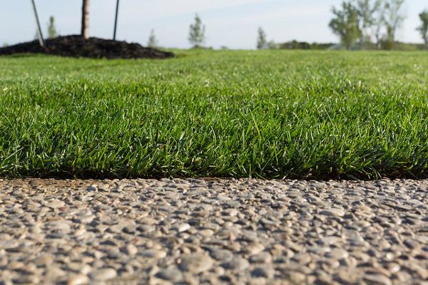 Fall Sod Establishment Greenhorizons Grass Turf Green Lawn Install