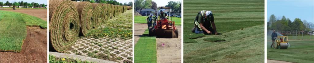 Bernie Arbour Memorial Stadium Grass Turf Green Lawn Install