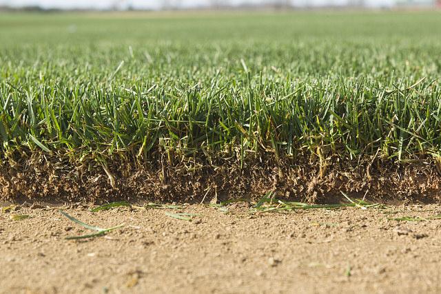 Aerate Grass Turf Green Lawn Install